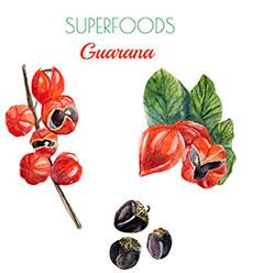 Hvad er guarana