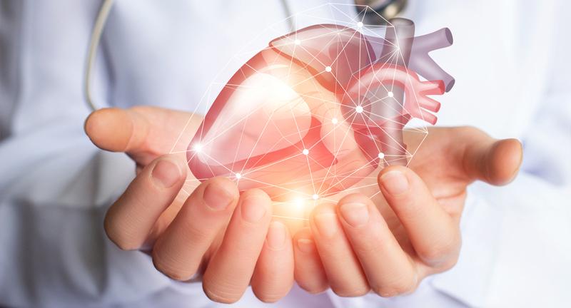 Curcumin har en blodfortyndende effekt, og antioxidanter kan støtte hjertesundheden.